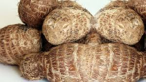 Cocoyam: Still cultivated far below potential yield | The Guardian Nigeria  News - Nigeria and World News — Features — The Guardian Nigeria News –  Nigeria and World News